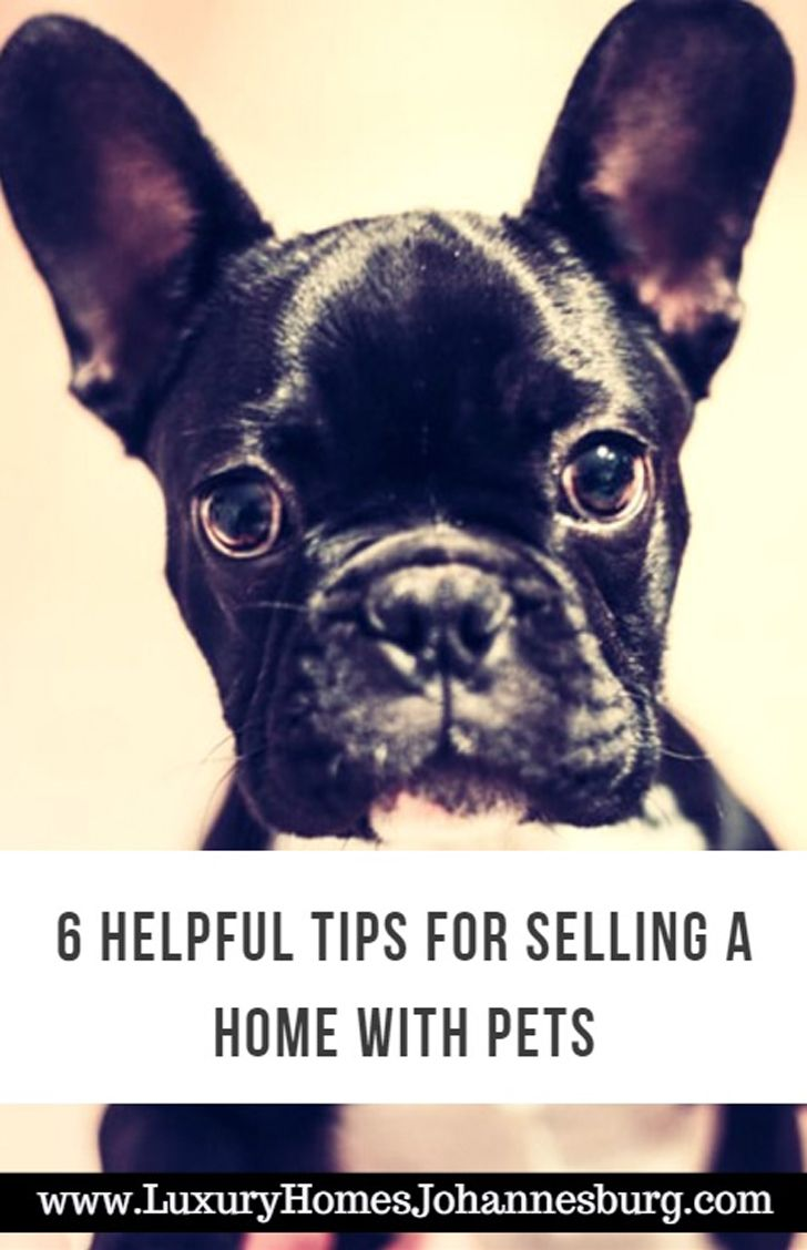 6 Helpful Tips For Selling A Home With Pets Best Small Dogs
