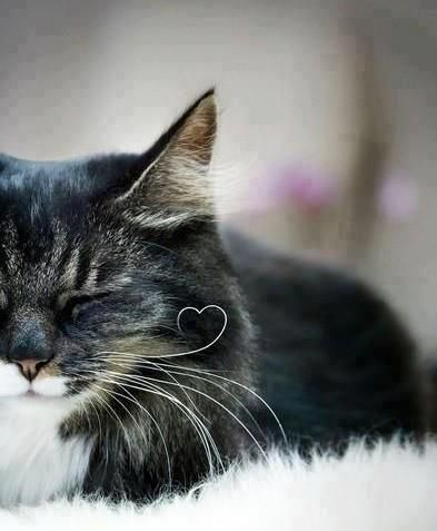 The love heart in his whisker <3