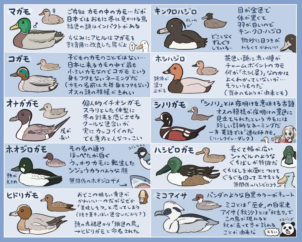 冬のカモ早見表 鳥 図鑑 動物 図鑑 Gif かわいい