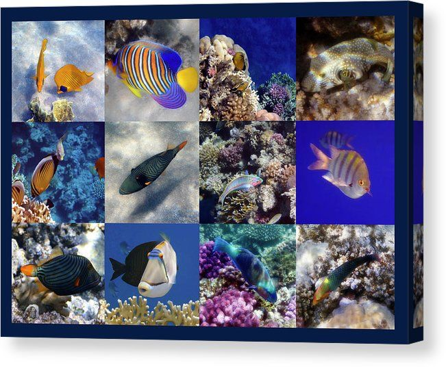 Here is a new collage of my underwater sealife photography. Fantastic as wall art