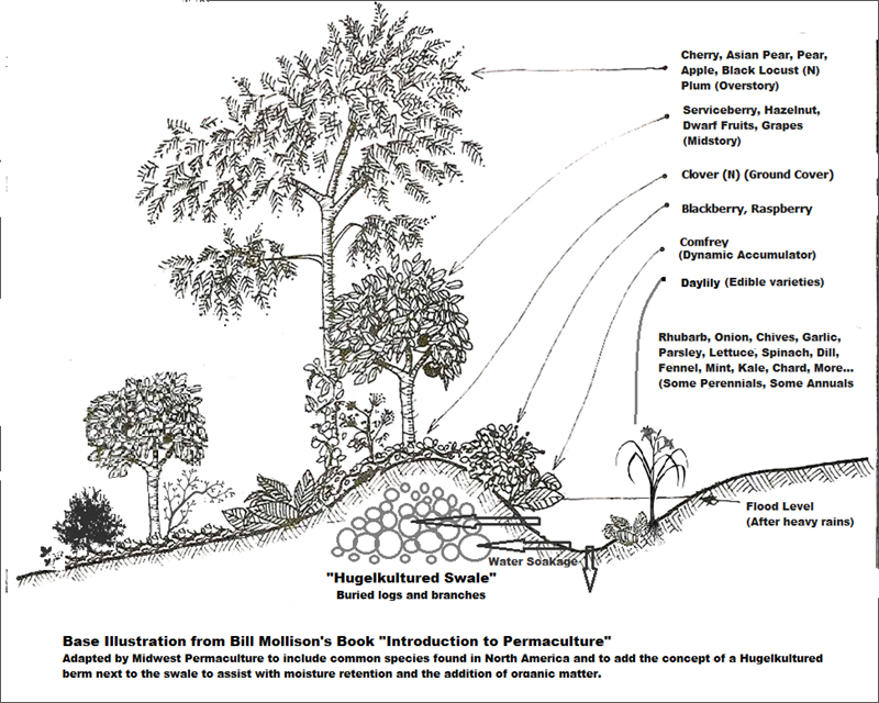 Plant guild diagram mounding bed 1 tallest fruitnut tree 2 plant guild diagram mounding bed 1 tallest fruitnut tree 2 ccuart Image collections