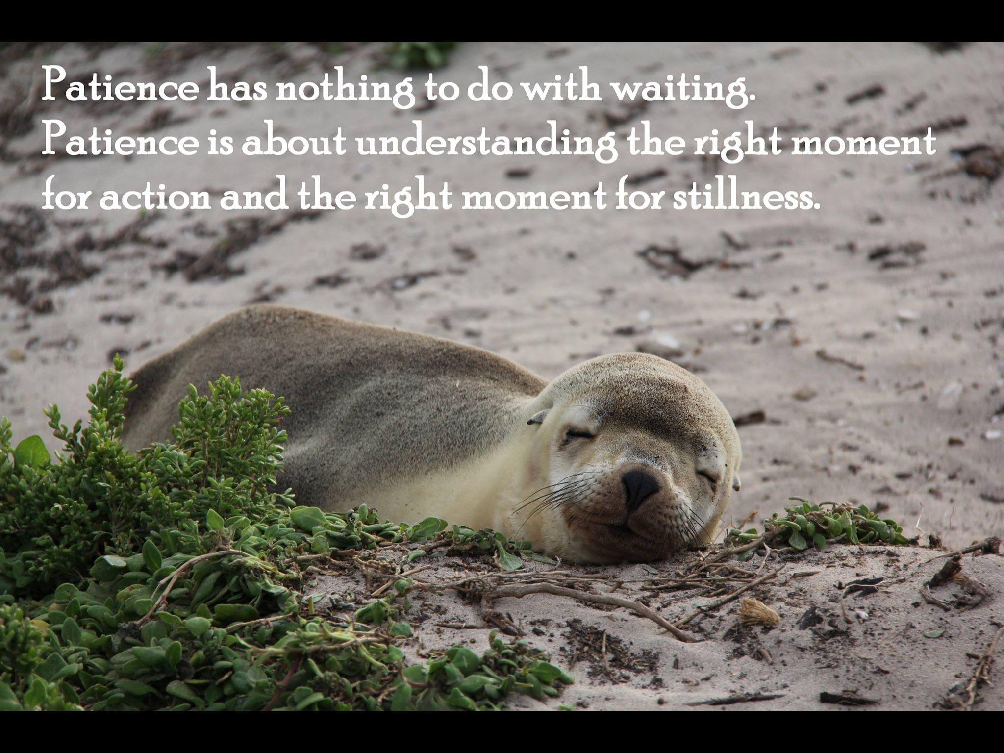 Patience has nothing to do with waiting. Patience is about understanding the right moment for action and the right moment for stillness.