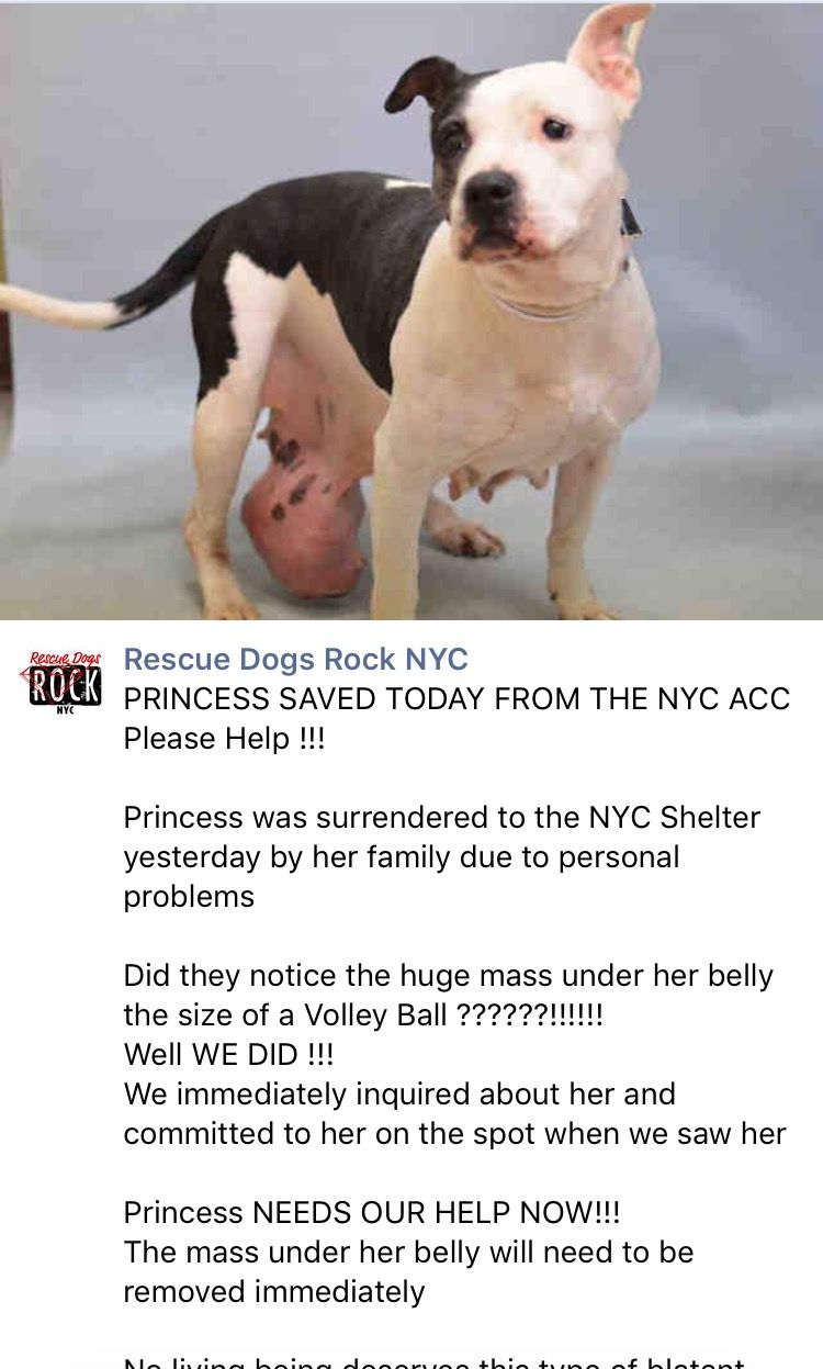 11 6 16 Princess Is Saved By Rescue Dogs Rock Nyc Please Consider Donating To Save Her Life Thank You Ij Https M Facebook Com Rescuedogsrockn Honden