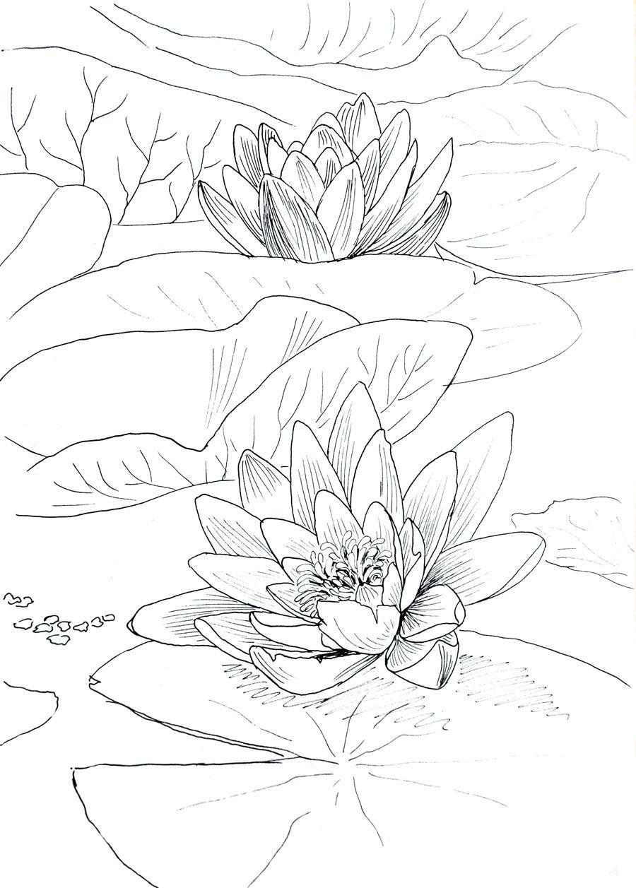 Rysunki Kwiatow Malarstwo Rysunek I Grafika Drawings Flower Drawing Ink Drawing