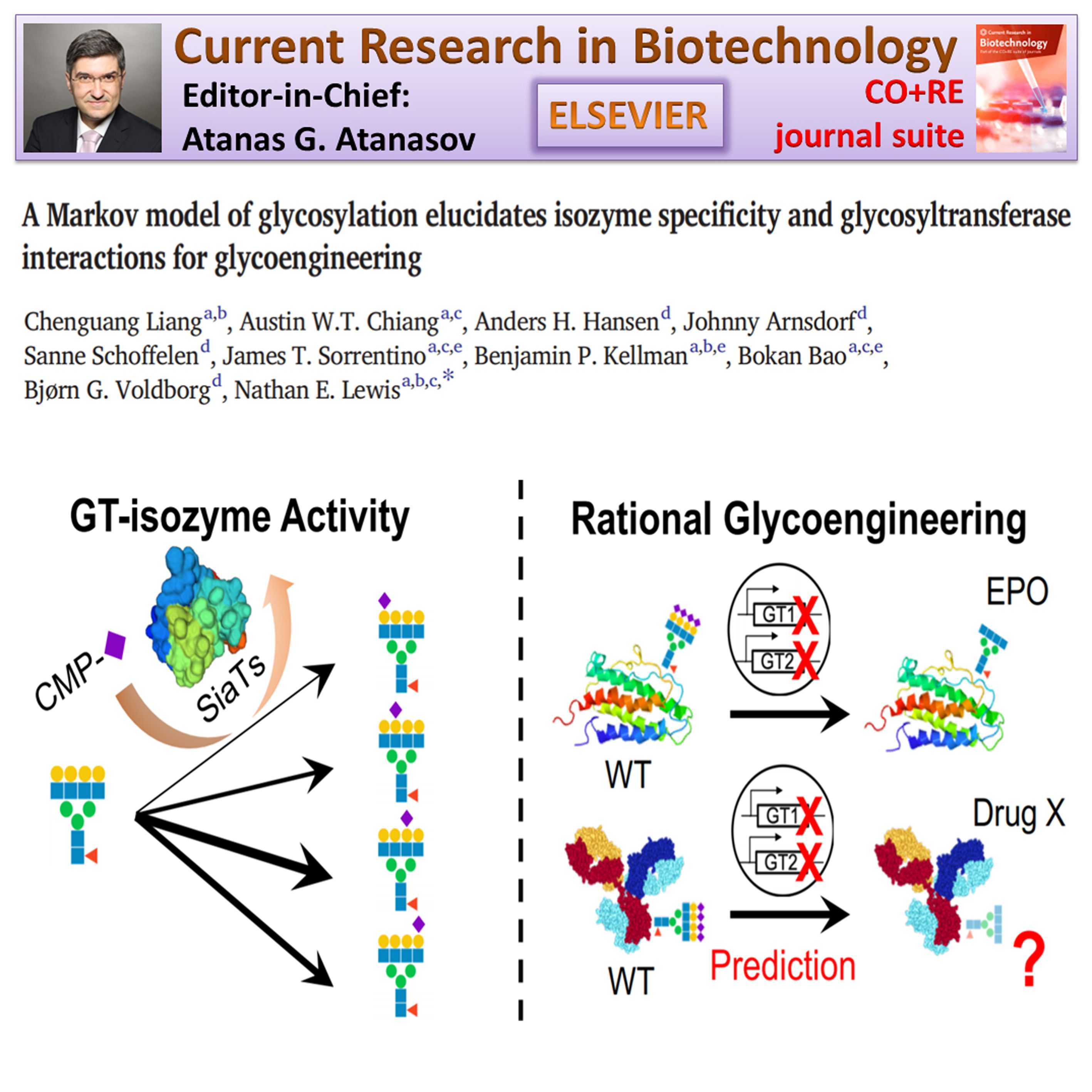 A Markov Model Of Glycosylation Elucidates Isozyme Specificity And