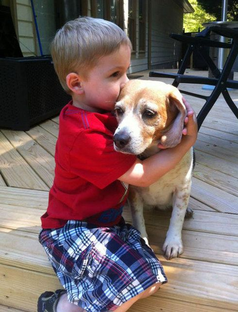 Inseparable friends: Beagle and boy's heartwarming moments together - (PHOTOS)