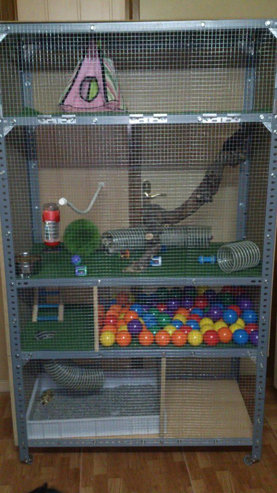 Well look at that a cage made out of a inexpensive metal for Plastic bin guinea pig cage