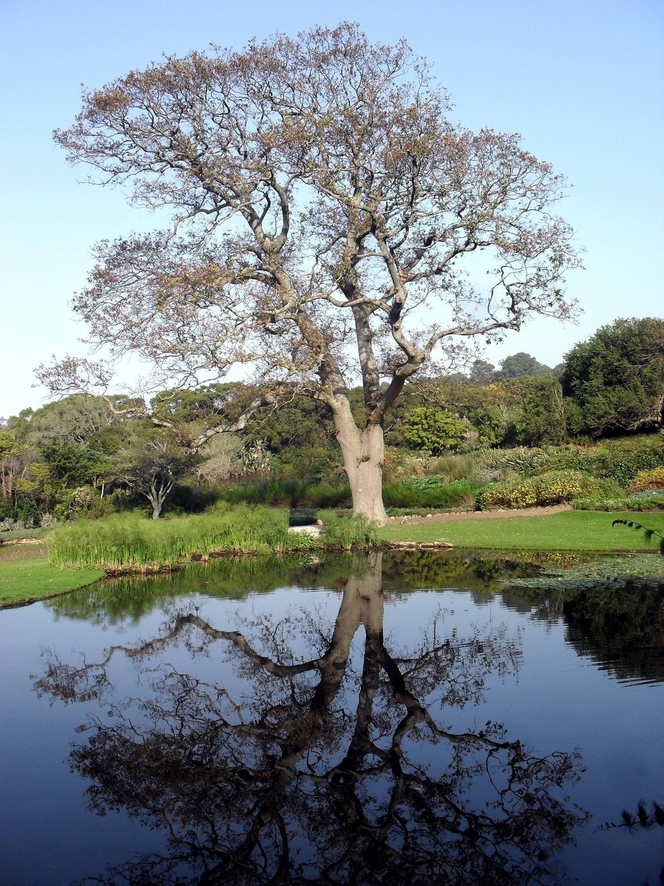 Capetonian Reflection
