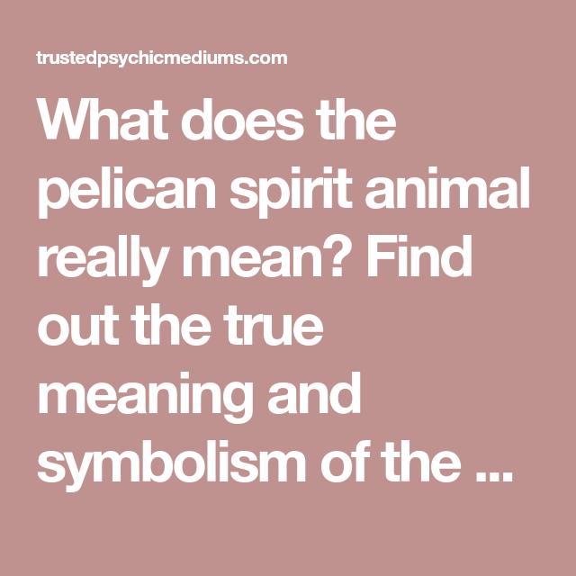 The Pelican Spirit Animal Animal