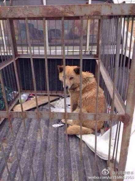 Dog Shelter Staff Kill Puppies In Front Of Their Mother Shelter