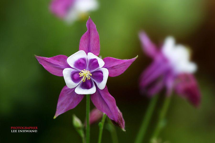 Flor violeta y blanco (LEE INHWAN)