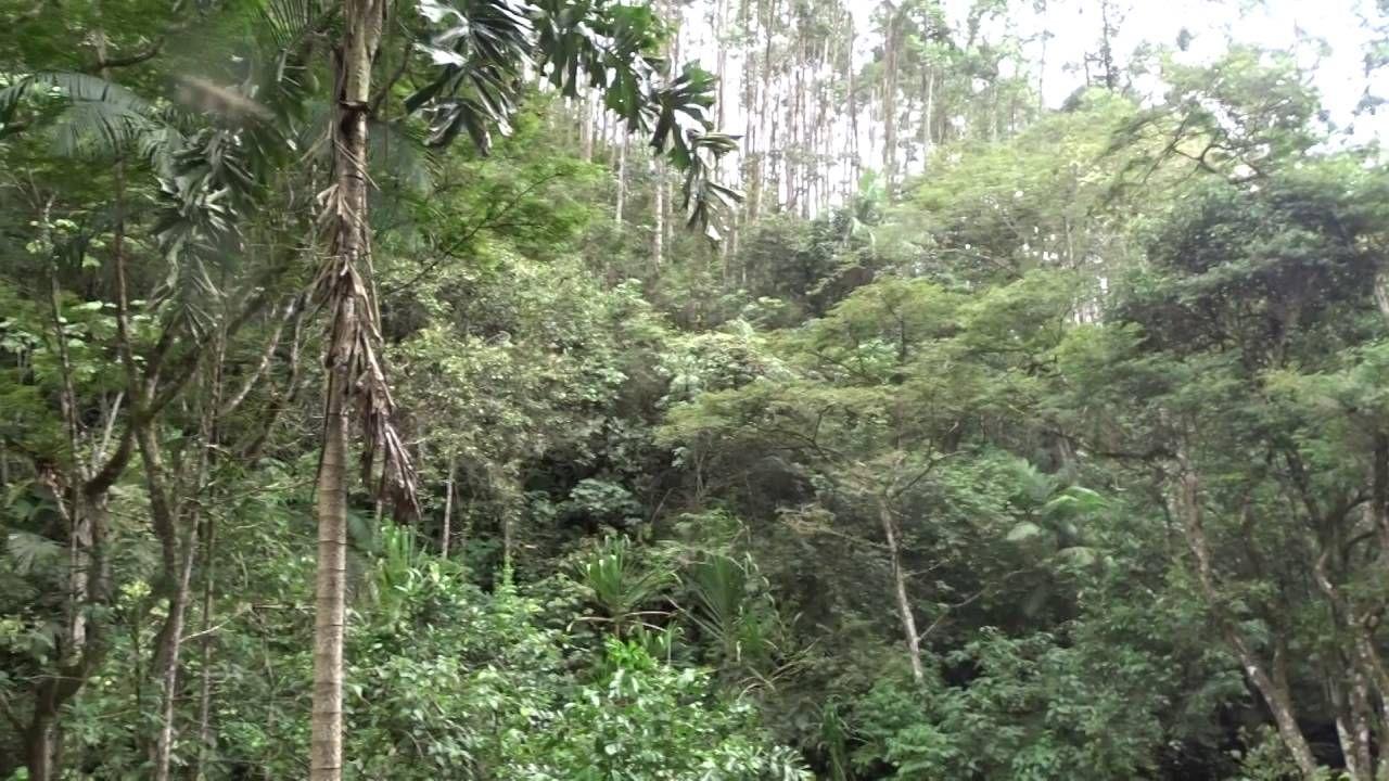 Abejas en Bosques Nativos