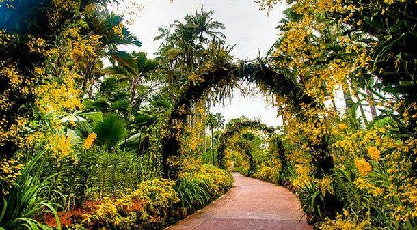 Singapore Botanic Gardens (Singapore) GARDENS Pinterest