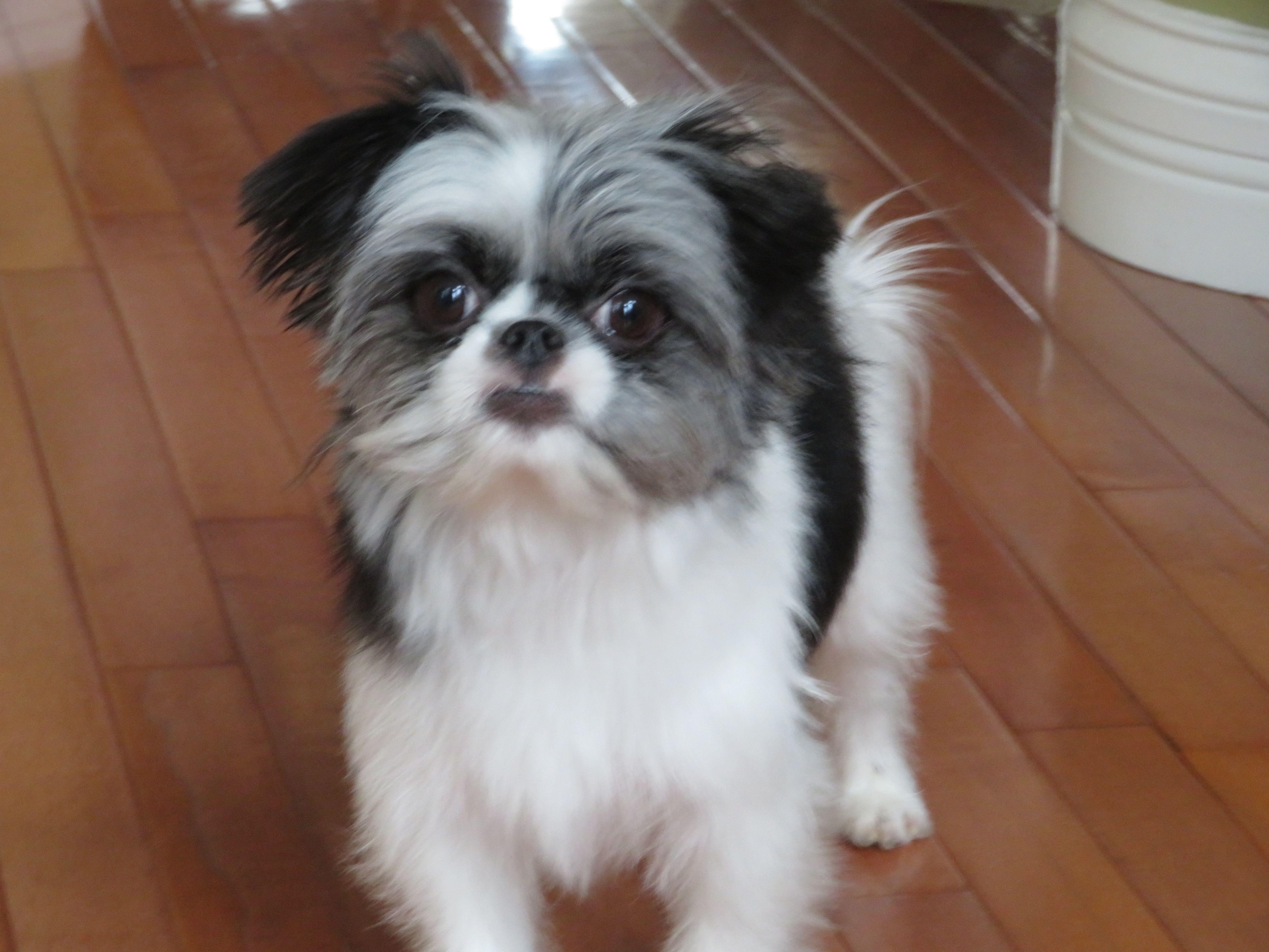 Adopt Ike On Dog Adoption Animal Shelter Homeless Pets