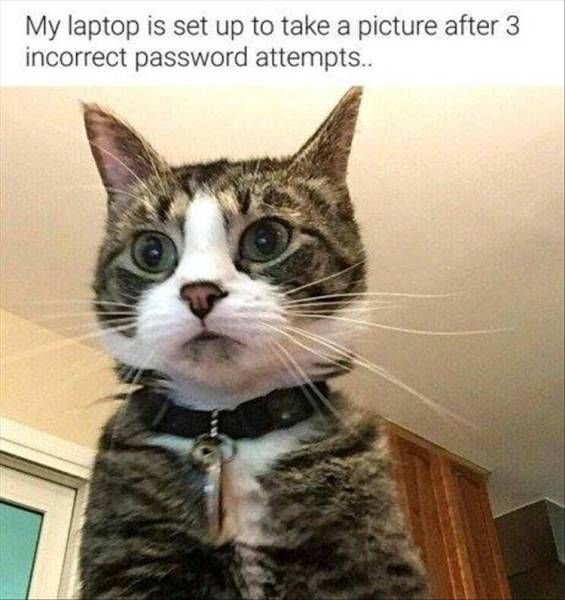 Cat got busted trying to use computer.