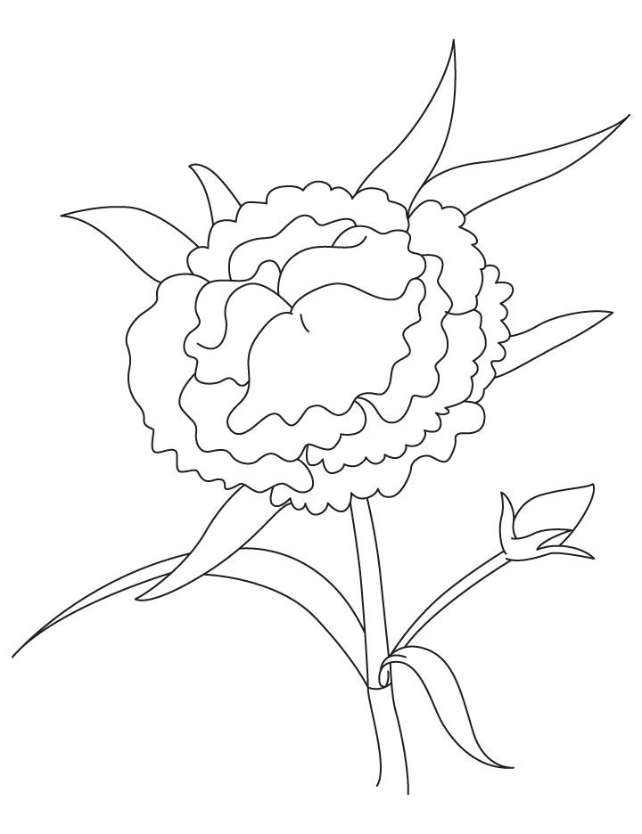 Japanese Camellia Coloring Page Flower Coloring Pages Flower