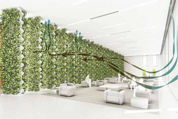 Purificación de aire basado en sistema de plantas hidropónicas.