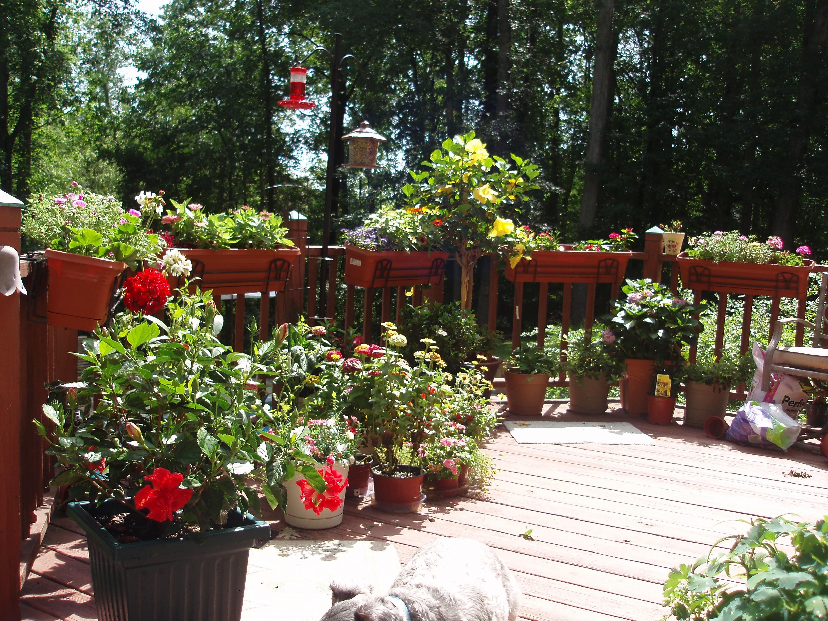 Amazing I Love Container Gardening On The Deck!Tips On Gardening In A Small Space  And Attracting Beautiful Birds And Butterflies. Distractions For The Kitty.