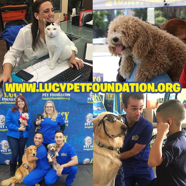 Lucy Pet Foundation Pet hacks, Pets, Your pet