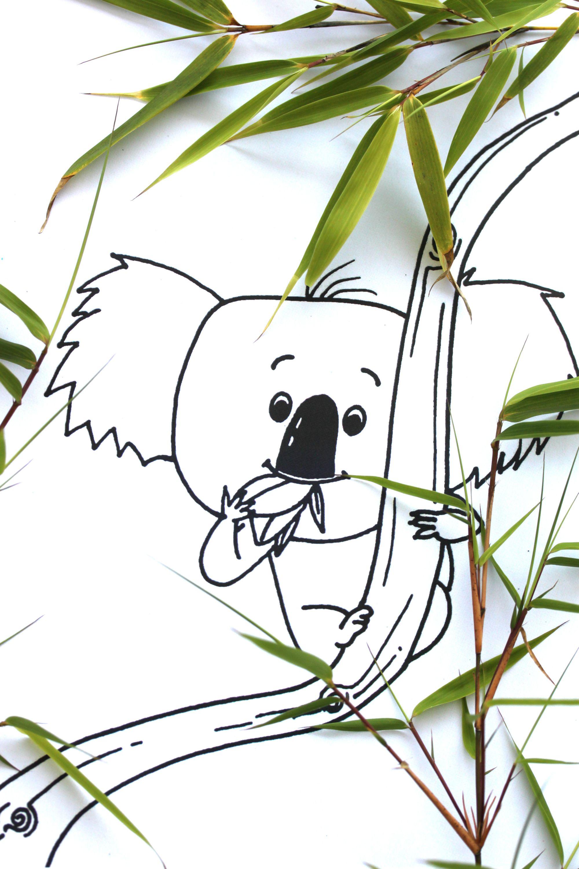 "ausmalbild ""the koala who could trau dich koalabär"" in"