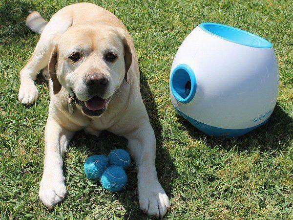 Fido Meet Ifetch An Interactive On Demand Ball Launching Toy