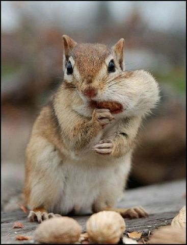 :) Yes, heaven (the new earth) will have squirrels.