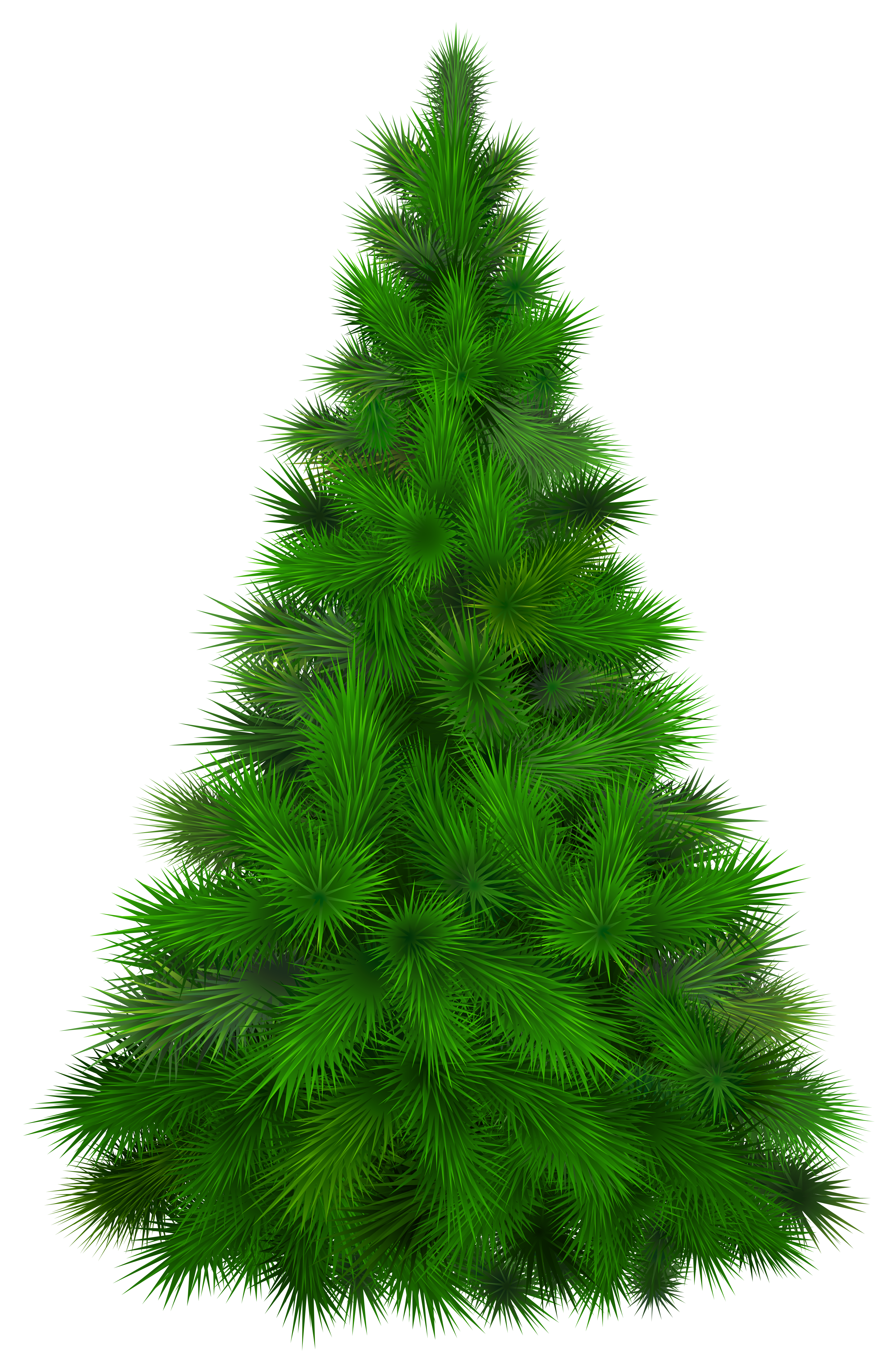 pine tree clipart cypress tree pencil and in color pine [ 3371 x 5098 Pixel ]
