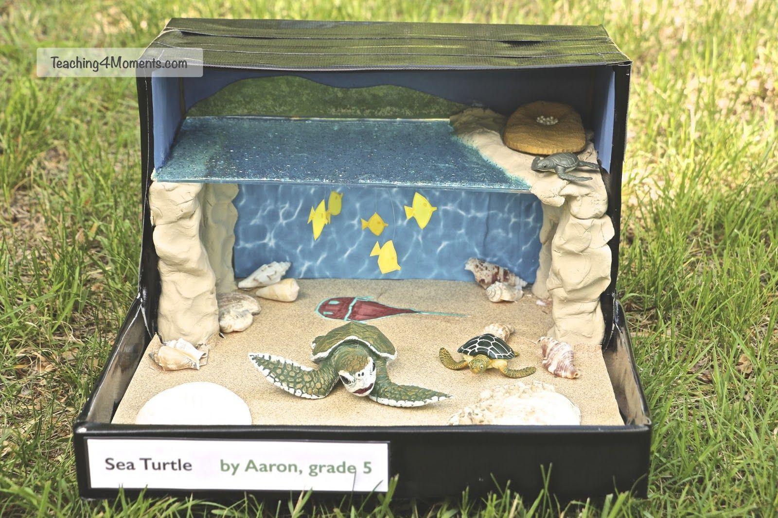 Sea Turtle Diorama