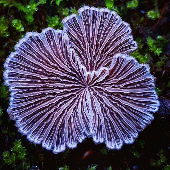 Mushroom Ninja Explores The Beautiful World Of Exotic Fungi On - Photographer captures the beautiful diversity of australias fungi