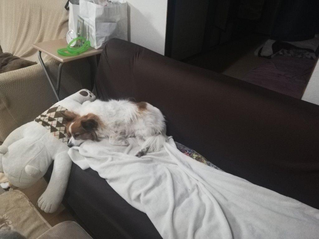 突然愛犬が急性肝炎に 治る 動物病院で教わった原因や治療法まとめ 犬 動物 病院