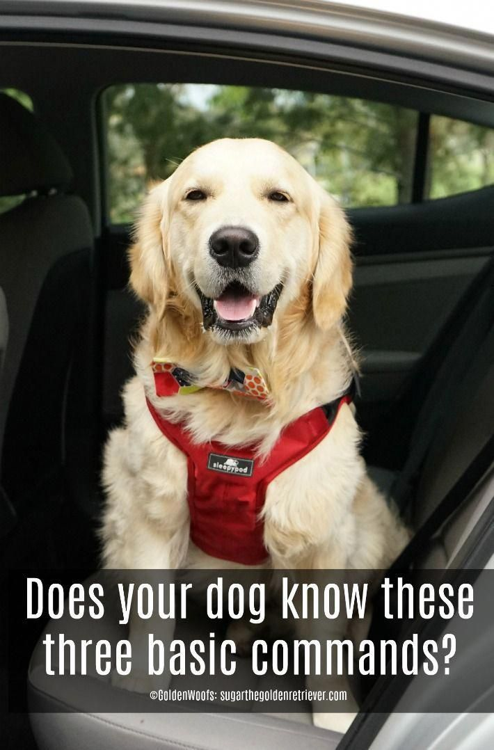 Commands Every Dog Should Know And Be Sleepypod Safe In The Car