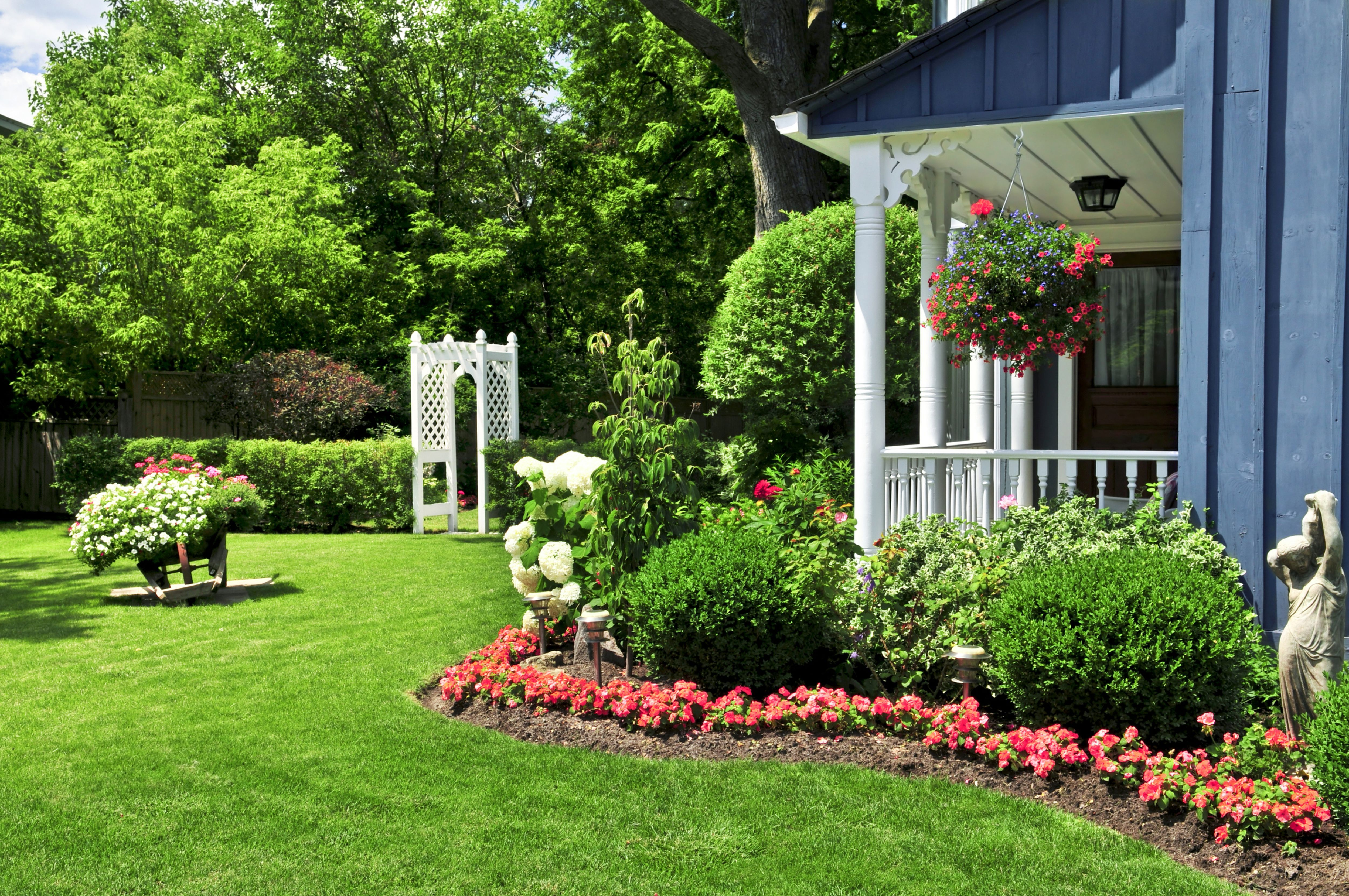 Glamorous landscaping plants arizona and landscaping plants for south florida