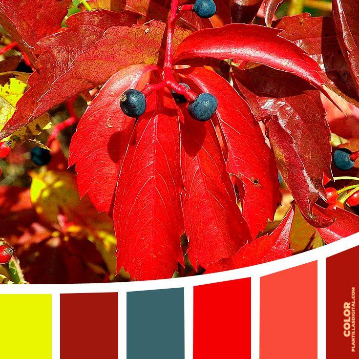 Color 148 Apunta y explora tus colores o códigos hexadecimales favoritos con el color número 148 en paleta...