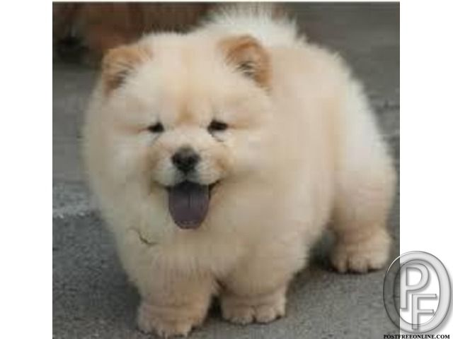 Pin By Danica Everett On Smiles In 2020 Puppies Cute Dogs Fluffy Dogs
