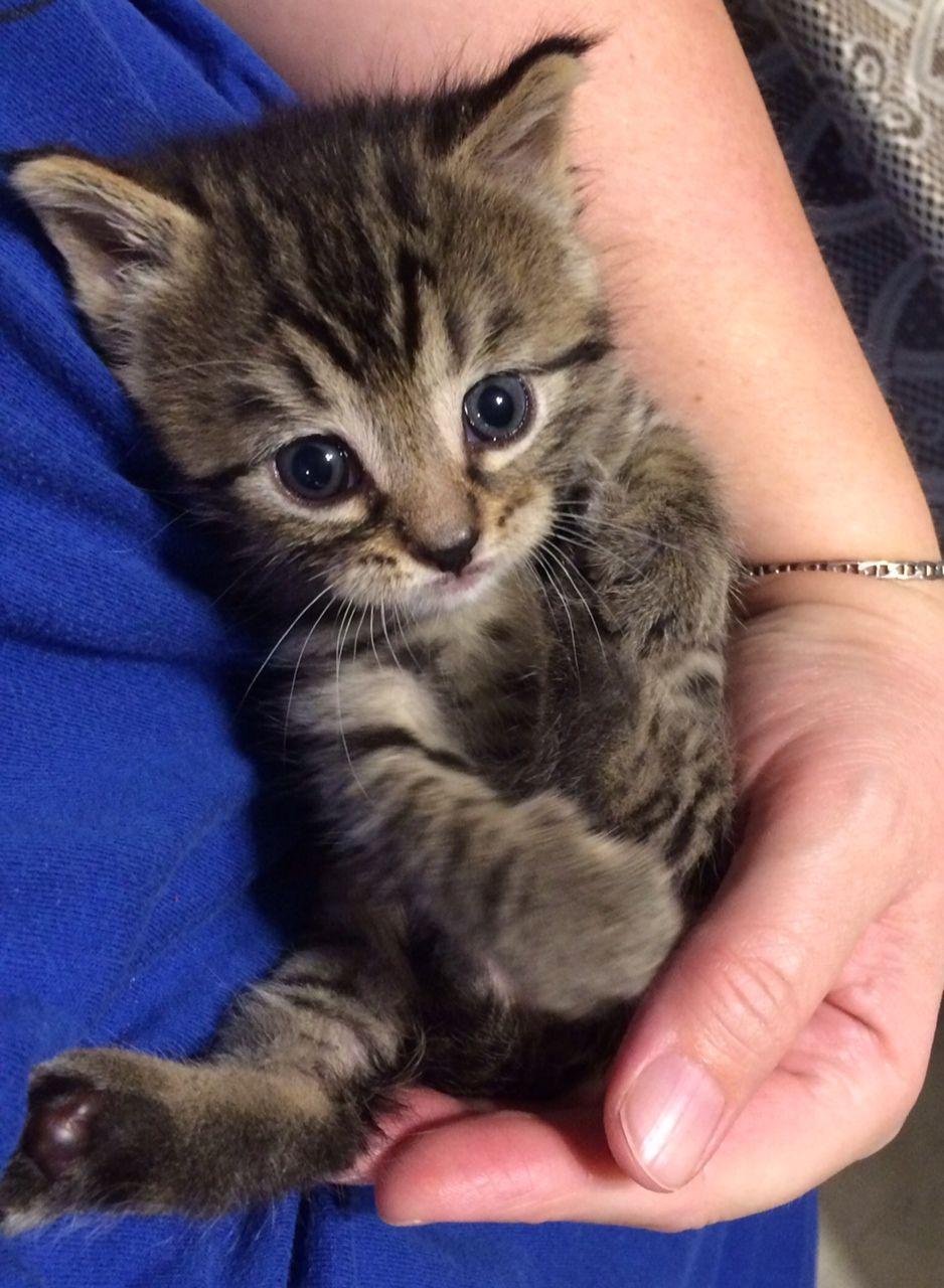 Caturday Night Gaaaaaaaaaa Lookit That Face Kitten Rescue Kittens Cutest Kitten