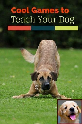 House Training A Puppy In Winter And Dog Training Courses In