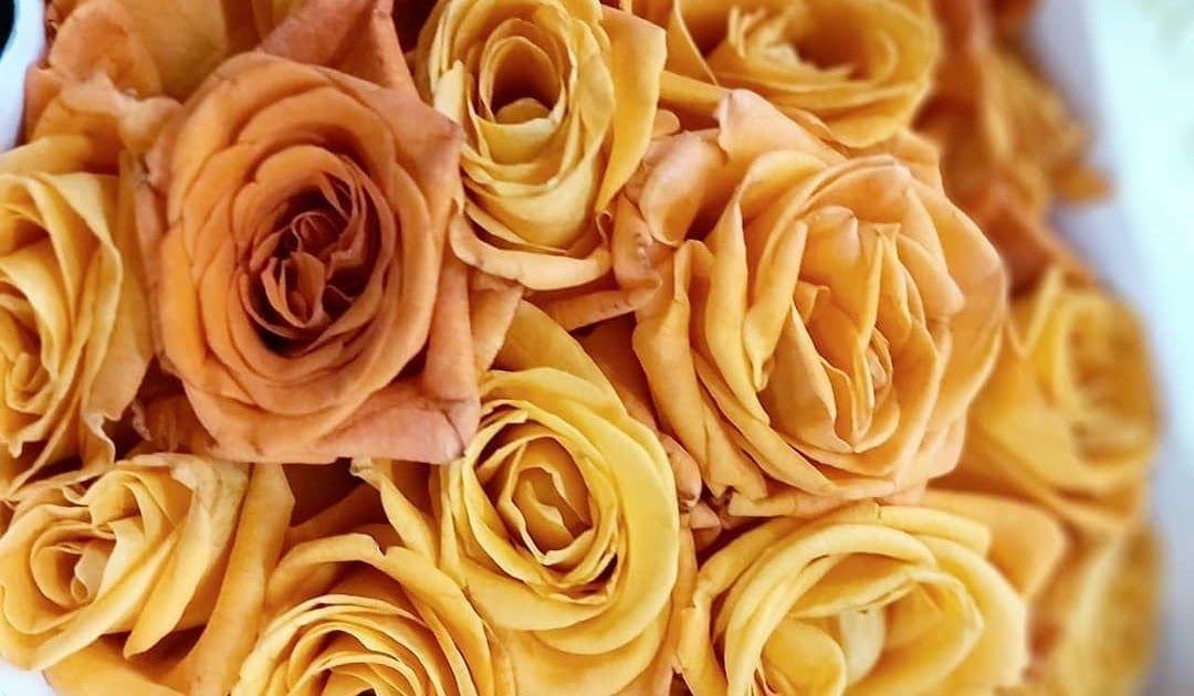 Https Ift Tt 2ryverm Mawar Kuning Yellow Rose Deskripsi Warna Kuning Dalam Bunga 10 Warna Bunga Mawar Dan Maknanya Apa Favoritmu Mer Bunga Gambar Bunga Mawar