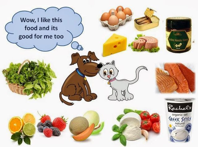 People Food Pet Food That Is Good For Dogs Cats A Guide In
