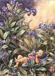 Kleurplaten Bloemenelfjes.Flower Mary Barker Google Zoeken Bloemenelfjes Flower Fairies