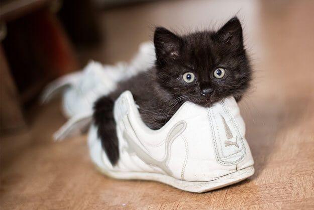 18-katjes-die-jouw-dag-weer-goed-maken