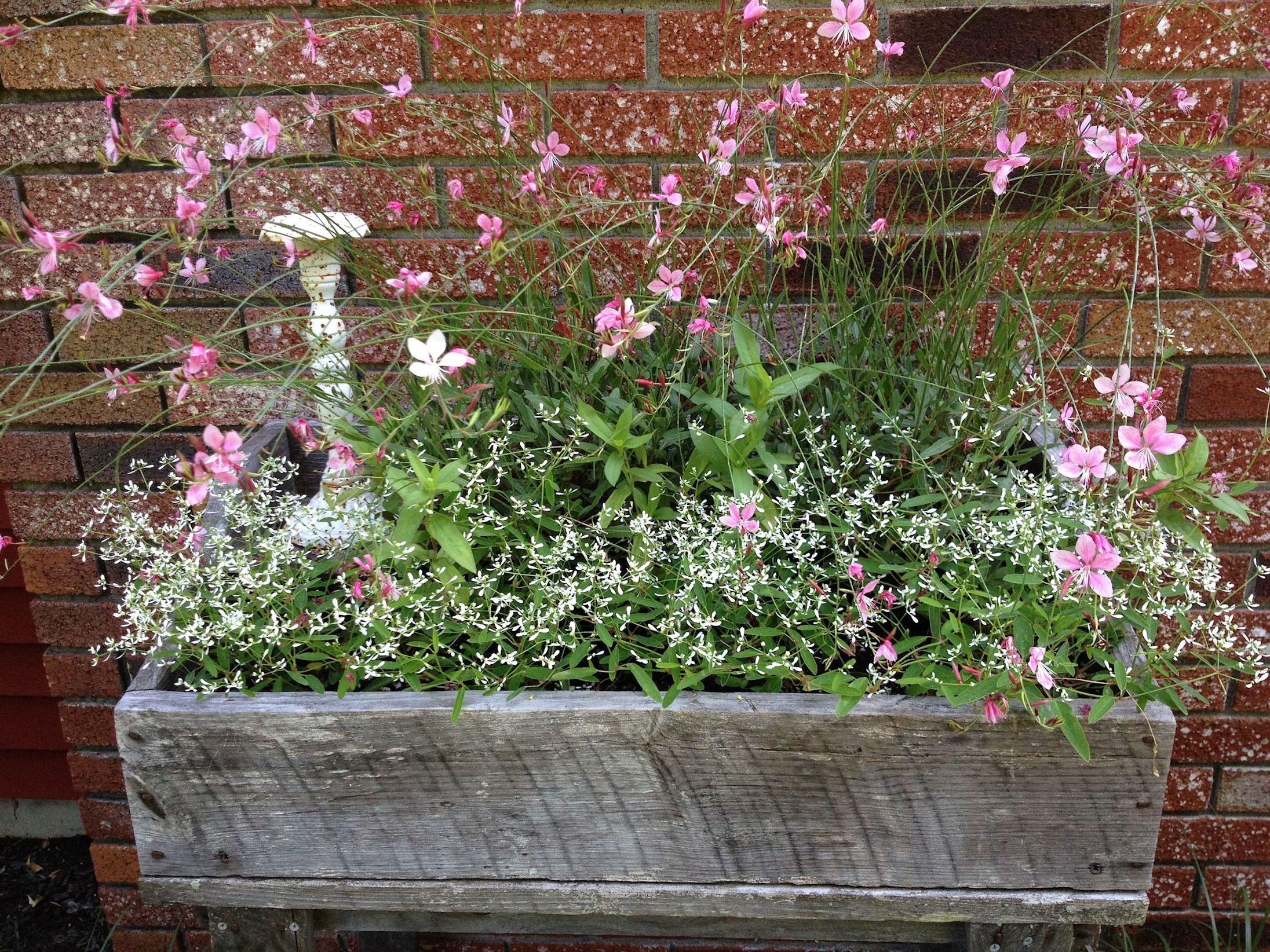 Home garden design flower  Pin by Wendy Rexus on Landscaping  Pinterest  Gardens