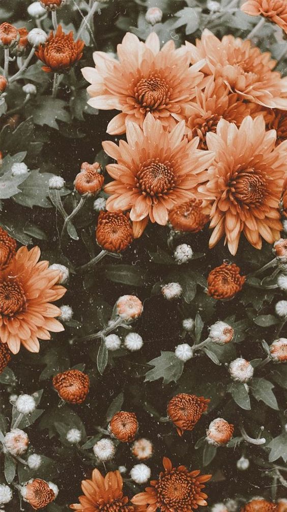 45+ Free Beautiful Summer Wallpapers For iPhone | The Chic Pursuit