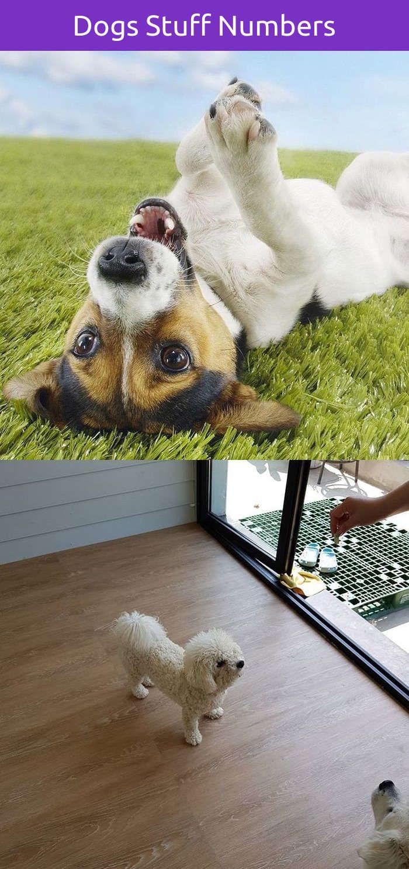 Funny dog and cat memes dog training agility pinterest dogs