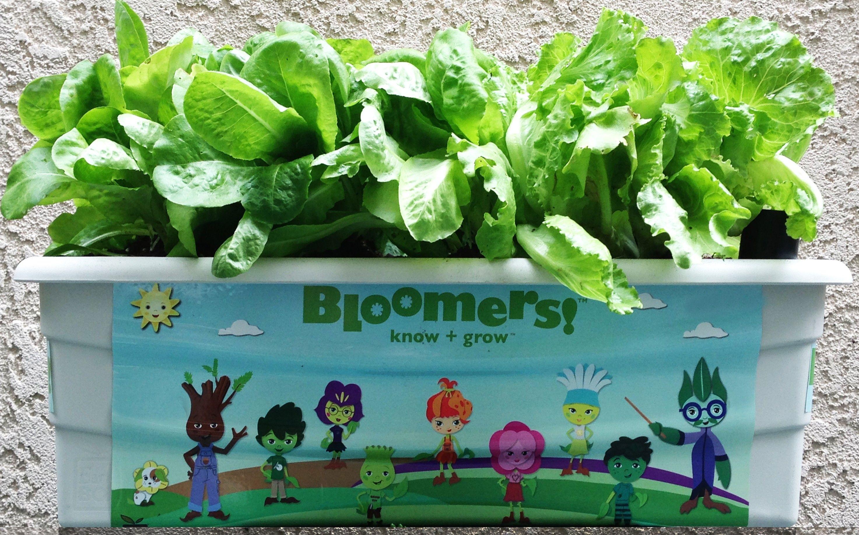 Bloomers Homeschool Curriculum Garden Kit