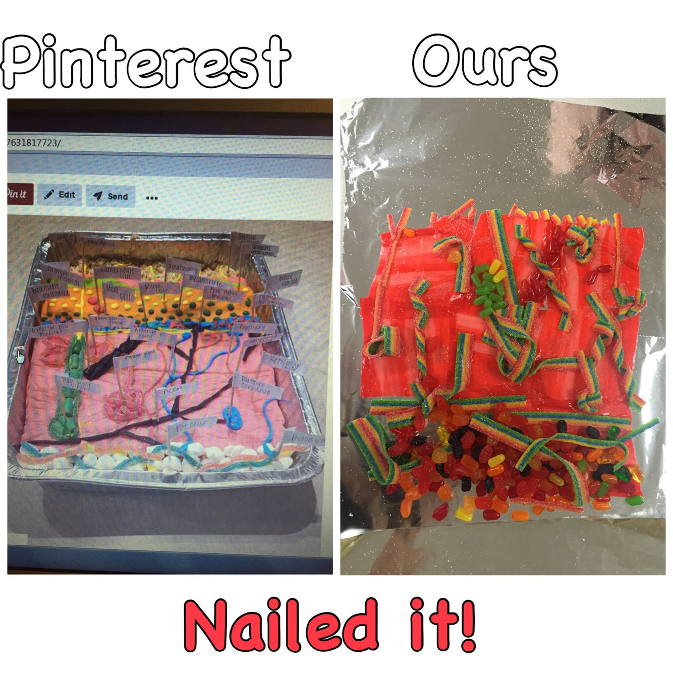 We Did Our Integumentary System Model Tonight Nailed It