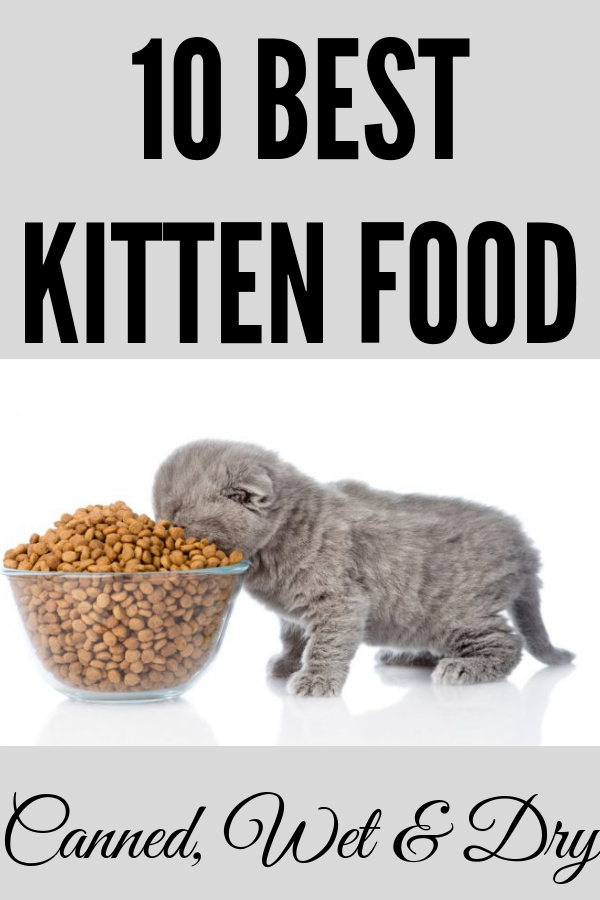 10 Best Kitten Food Canned Wet And Dry 2020 Kitten Food Kittens Dog Food Recipes