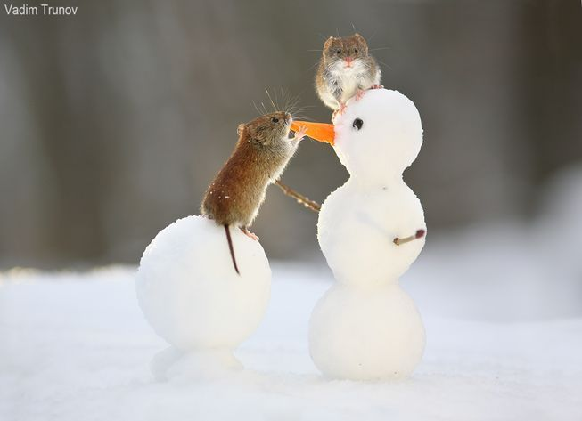 Squirrels and other rodents have a blast in the snow. #animales #animales adorables #animales funny #animales graciosos #animales hermosos #animales salvajes #animales tatuajes #baby animales #build #cat #creatures #dog #Photographers #playground #salvajes #snowballs #snowmen #Toss #winter #Woodland