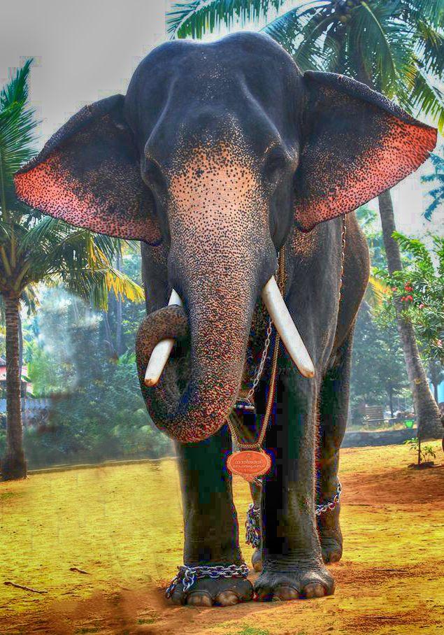 Kerala Elephant | aanachandam | Pinterest | Kerala