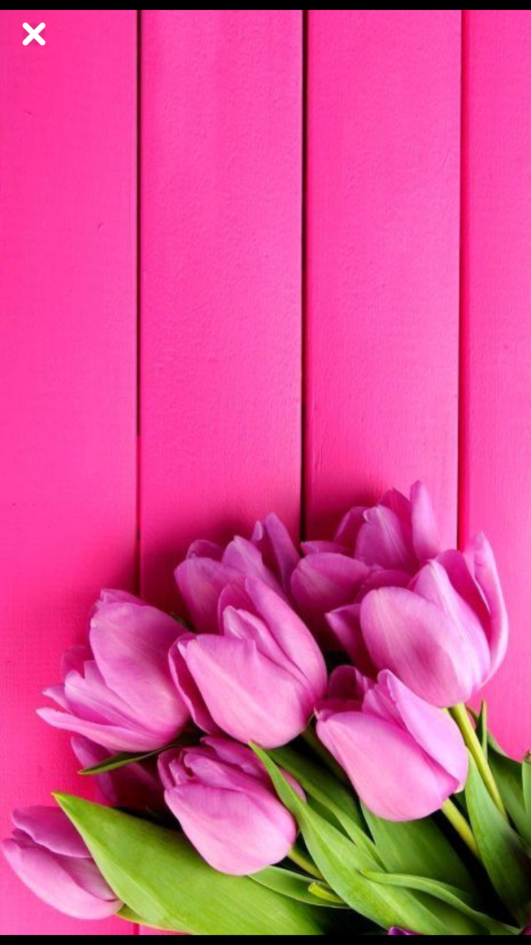 Pink Flowers Colors Nature Iphone Wallpaper Flower Wallpaper Floral Wallpaper