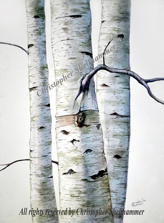 Artist Pamela Wilhelm Crow In Winter Aspen Trees Birch Tree Art